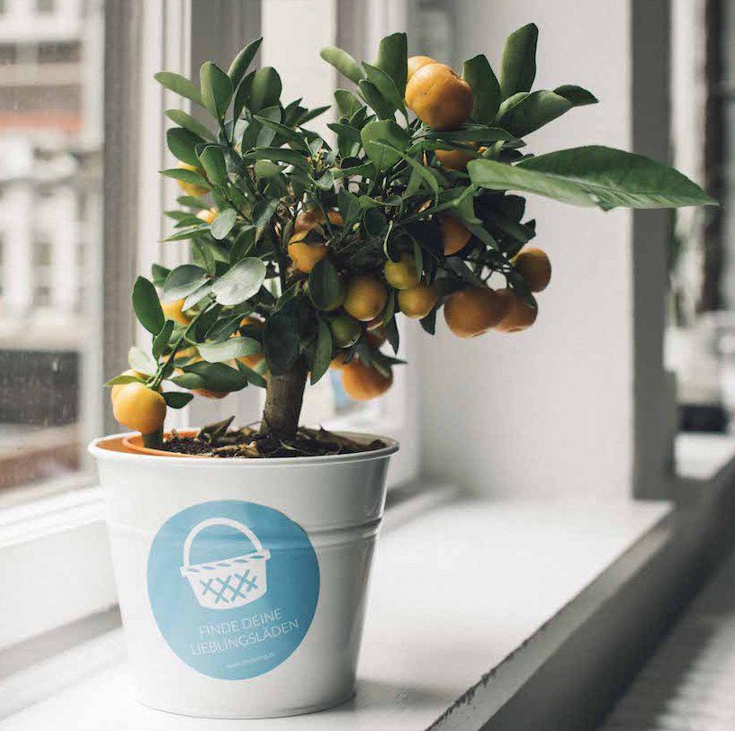 Findelings Mandarinenbaum Kopie