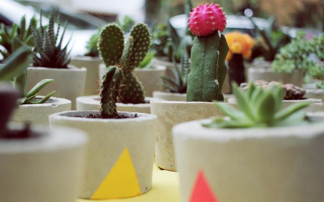 Des Kaktus' neue Kleider